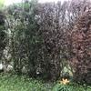 Cambiar pinos de cerramiento de jardin