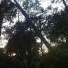 Podar o tirar árboles