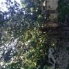 Talas de árboles y reforma jardín