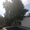 Cortar 3 copas árboles para que entre el sol