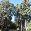 Tala árboles alpedrete
