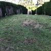 Plantar Cesped