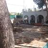 Corta y poda de pinos en un jardín privado