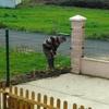 Instalar canaleta de desagüe en patio