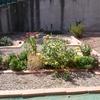 Plantar cesped natural