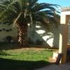 Cortar palmera