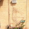 Proyecto de jardinería para terraza en barcelona ciudad