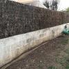 Reparación de muro de jardín  (enfoscar y pintar)