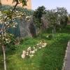 Presupuesto jardín