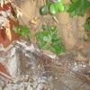 Podar árbol de mi jardín y controlar las raíces