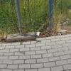 Reforma de vallado y acerado junto a solar
