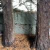 Talar árboles y Ramas