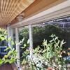 Muro ventana térmica más persianas automatizadas antirobo 2,22 x 4,95m