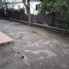 Plantar cesped en jardin de tierra