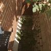 Limpieza de un patio de un chalet (adjunto fotos)