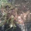 Poda y Desbroce de Jardín Particular