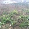 Realizar puesta apunto jardin