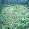 Echar cemento y baldosa en jardín
