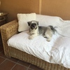 Tapizar almohadones conjunto sofa y butacas terraza