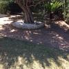 Poner hormigon impreso en jardin