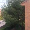 Podar árboles en madrid