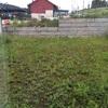 Hacer trabajo jardinería en patio