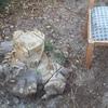 Retirar tocón (base árbol)