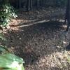 Replantar 50 m2 de césped y presupuesto para mantenimiento de jardin