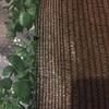 Colgar jardín vertical