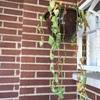 Sustituir plantas