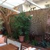 brezo jardin