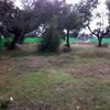 Presupuesto para preparación del terreno y siembra de césped en parcela sevilla