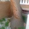 Quitar árbol de un jardín