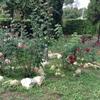 Busco jardinero lo antes posible