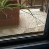 Arreglo mosquiteras