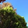 Quitar un pino muy alto en chalet adosado