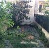 Arreglar jardín (podar un árbol y desbrozar hierbajos)