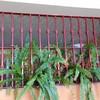 Poner rejas para terraza y ventana