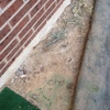 Arreglar jardín 50 mts