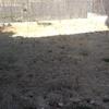 Realizar puesta a punto de jardín
