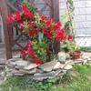 Ampliacion vivienda y jardin