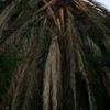 Sacar una palmera