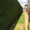 Realizar Mantenimiento jardin