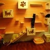 Gimnasio pared gatos