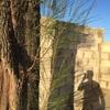 Talar árbol 10m