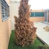 Cortar árbol en arroyomolinos