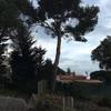 Tala de tres pinos
