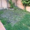 Acondicinar la tierra y plantar cesped natural en un pequeño jardín