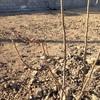 Descompactar y triturar terreno