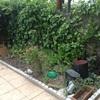 Mantener jardin
